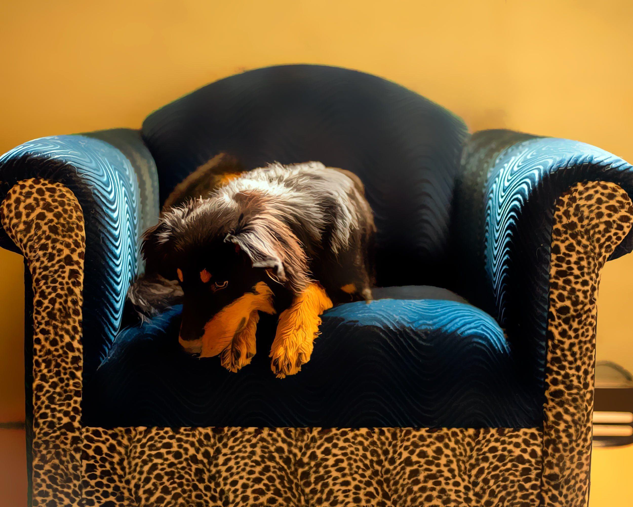 Sugar Chair