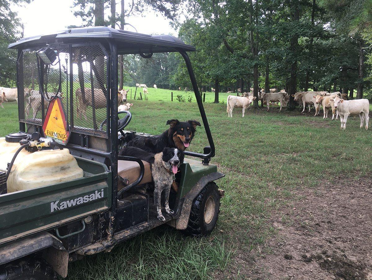 Alabama Farm Dog