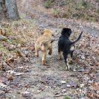 A Farm Dog Puppy Story